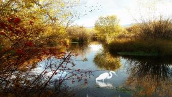 Birds lakes landscapes water wallpaper