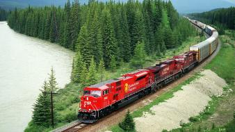 Canada canadian grove pacific forests Wallpaper
