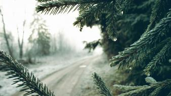 Depth of field landscapes macro nature spruce Wallpaper