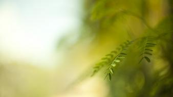 Depth of field nature plants wallpaper