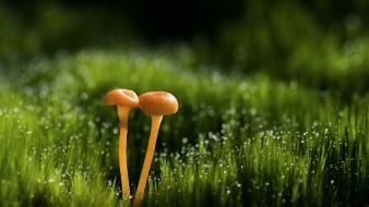 Dew grass mushrooms nature Wallpaper