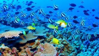 Great barrier reef blue ocean Wallpaper