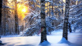 Hdr photography landscapes snow sunlight trees wallpaper