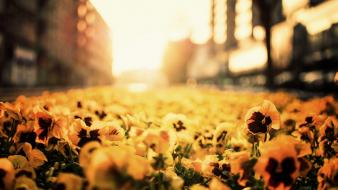 Poland poznan blurred background depth of field flowers wallpaper