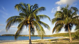 Puerto rico beaches coconut red wallpaper