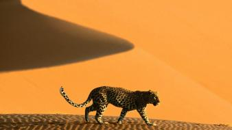 Africa namibia animals deserts dunes wallpaper