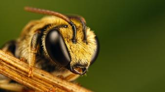 Animals bees insects nature wallpaper