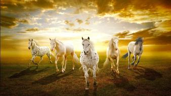 Animals horses prairie sunset white wallpaper