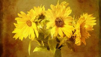 Artwork flowers sunflowers wallpaper