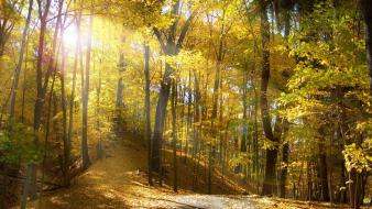 Autumn forests nature outdoors trees wallpaper