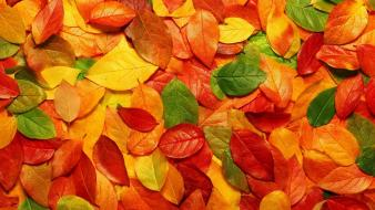 Autumn leaves nature seasons Wallpaper