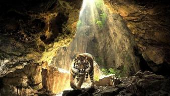 Cave tigers wild animals wallpaper