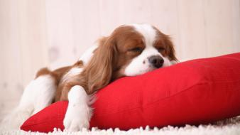 Cute puppies sleeping wallpaper