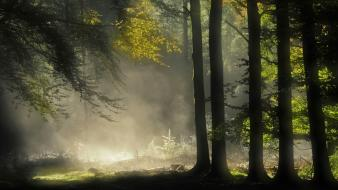Dawn enchanted forests grass landscapes Wallpaper