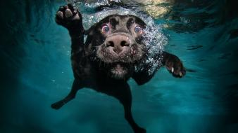 Dogs swimming pools underwater wallpaper