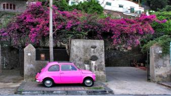Fiat 500 italia italy flowers pink wallpaper