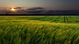 Fields landscapes sunset wallpaper