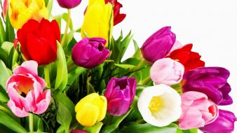 Flowers multicolor tulips wallpaper