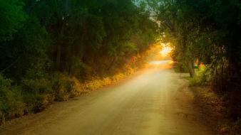 Forests nature roads sunset trees wallpaper