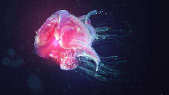 Justin maller motion abstract jellyfish underwater wallpaper