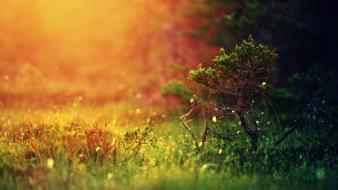 Mystical sunshine nature wallpaper