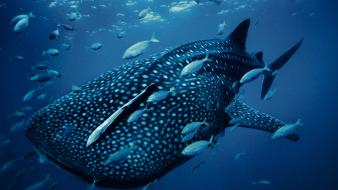 National geographic animals fish nature whales wallpaper