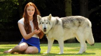Sophie turner (actress) direwolf wolves wallpaper