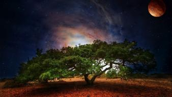 Tree at night wallpaper