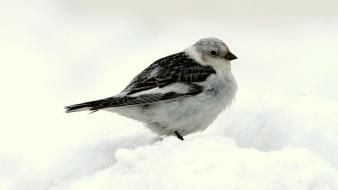 Alaska animals birds nature snow wallpaper