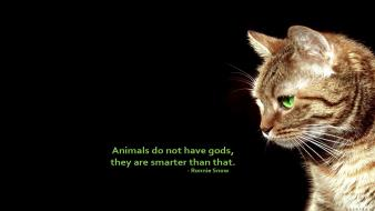Animals black background cats quotes simple wallpaper