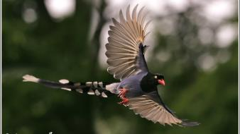 Birds flying nature wallpaper