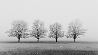 Black and white fields fog grayscale landscapes Wallpaper
