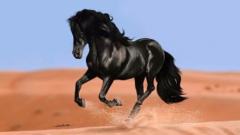 Black horse wallpaper