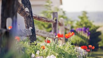 Buds depth of field fences flowers nature wallpaper