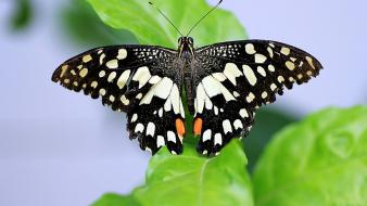 Butterflies insects nature wallpaper