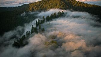 California redwoods clouds forests gray wallpaper