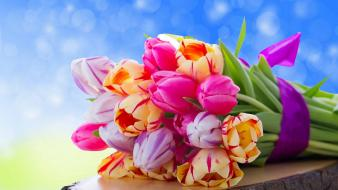 Colorful tulips bouquet wallpaper
