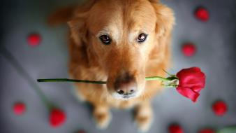 Dogs flowers wallpaper