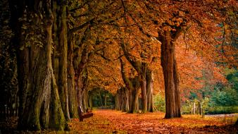 Fall nature photos wallpaper