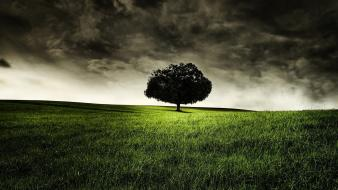 Grass landscapes lonely nature storm wallpaper