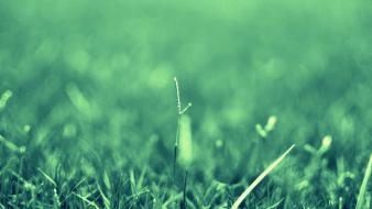 Grass macro photography wallpaper