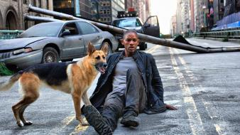 I am legend will smith actors dogs movies Wallpaper