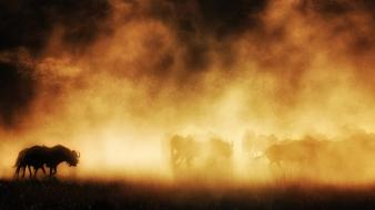 National geographic animals dust landscapes nature wallpaper