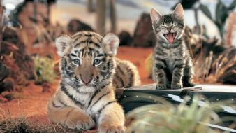 Tiger cub and cat wallpaper