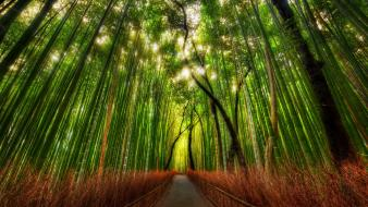 Trey ratcliff bamboo forests paths wallpaper