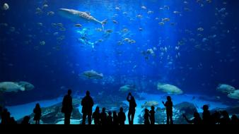 Turkey aquarium cities wallpaper