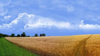 Wheat field landscape wallpaper