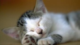 Animals cats kittens sleeping wallpaper
