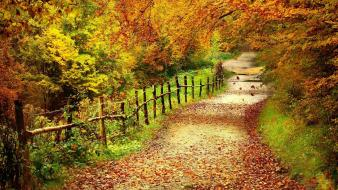 Autumn country road wallpaper