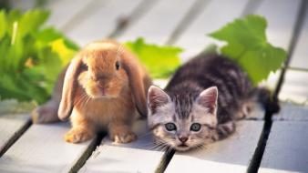 Cute cat rabbit wallpaper